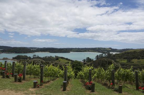 Waiheke-øya, New Zealand: Vineyard