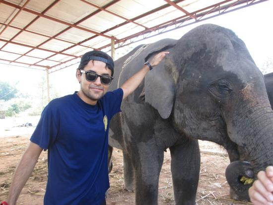 Baanlek Home Stay: Tour con elefantes.