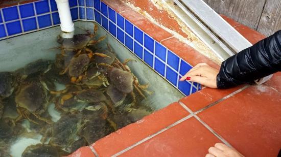 Morro Bay Sandpiper Inn : Granchi in attesa di essere mangiati,al porto.