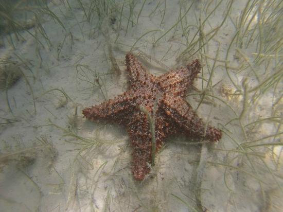Vip Divers: возле берега