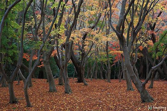 Koga, Nhật Bản: 興山園