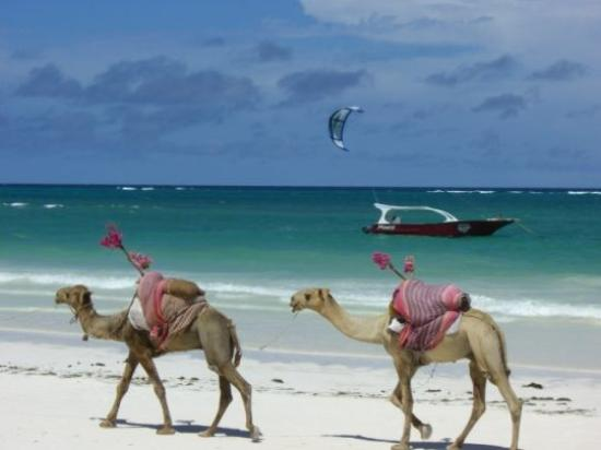 Diani Tours and Safaris - Private Day Tours : Diani Beach
