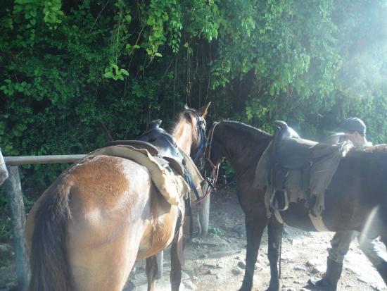 Caracha und Moreno - Picture of El Pat Ranch, Punta Cana - TripAdvisor