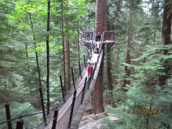 vancouver day out capilano suspension bridge tour guide