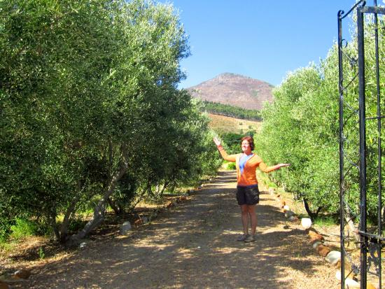 Gooding's Groves Olive Farm & Guest House: Love the olive groves