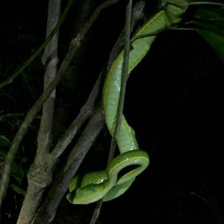 Monteverde Wildlife Refuge : Snake