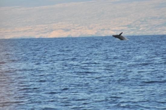 Ocean Sports Whale Watch Adventure: Christmas Whale!!!