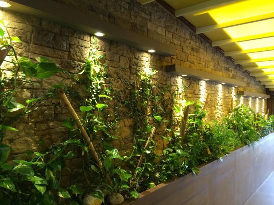 """Dame Nature : un coté du mur de """"vraies plantes"""""""