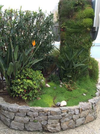 mur vegetal exterieur good mur vgtal extrieur naturel dans un patio with mur vegetal exterieur. Black Bedroom Furniture Sets. Home Design Ideas