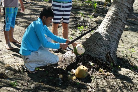Coco Mango Lodge: Les cocos fraichement coupées pour nous