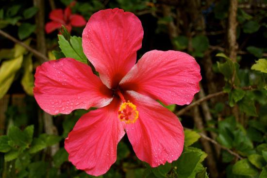 Hibiscus Picture Of Pousada Colibri Morro De Sao Paulo Tripadvisor