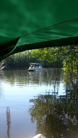 Island Pride Day Tours: Boat ride on the Black River Safari