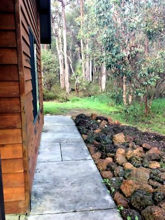 Island Brook Estate: the forest around the chalet