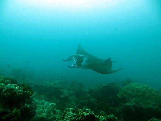 Euro Divers Sheraton Maldives: cool