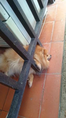 Rang Garden Bungalow Resort: Vorsicht, Wachhund :-)