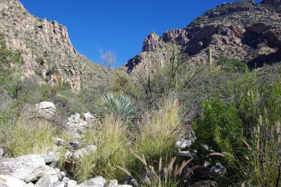 Pima Canyon: View up the canyon