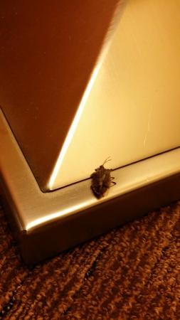 Staunton, VA: Stink bug!