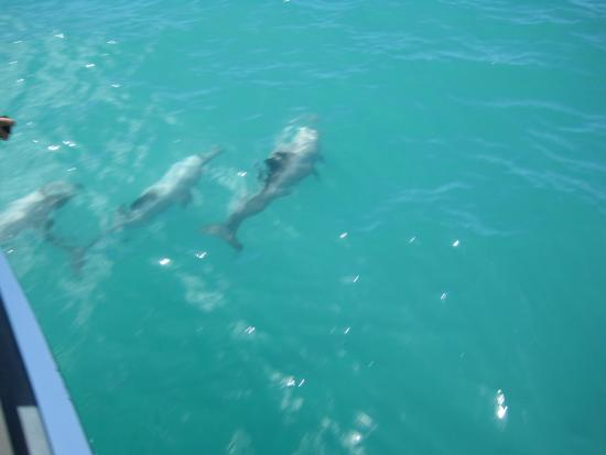 Coast up Close: Hector Dolphins
