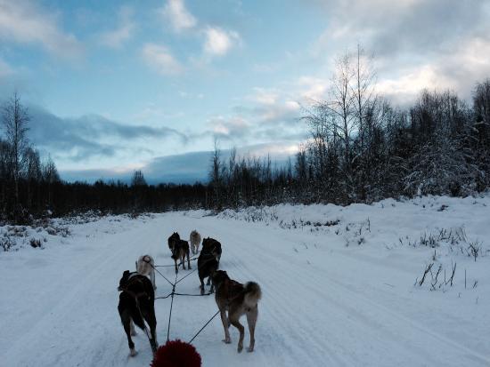 High Country Kennels: Alaskan Skies
