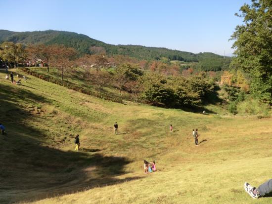 Odawara Wanpaku Land : 孫が滑り降りた斜面
