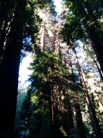Silver Lion Service - Private Tours : Muir Forest