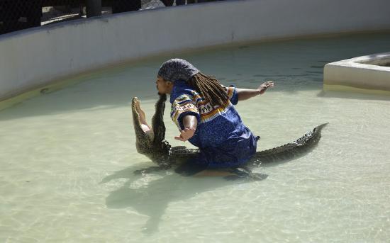 Miccosukee Indian Village : Excellent alligator show - crazy stuff.