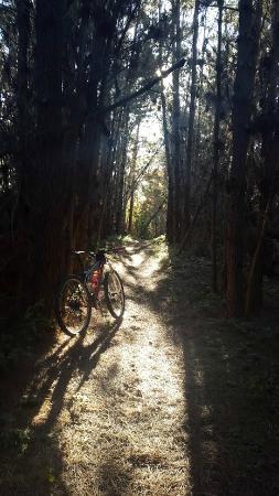 Point Reyes Hostel: Nearby mountain bike trail