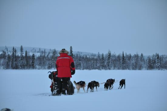Forest Hotel: Sled dogs