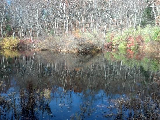 Hampden, MA: Lauging Brook Sanctuary Pond, Early November