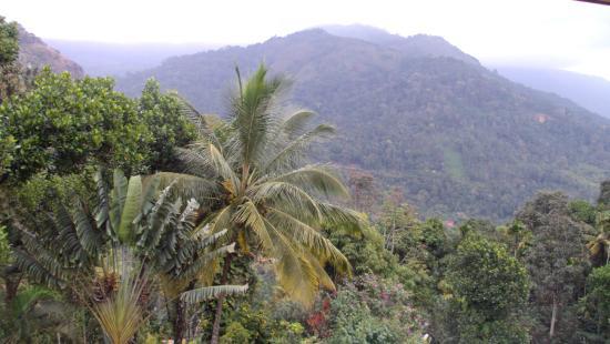 Igloo Nature Resort: view
