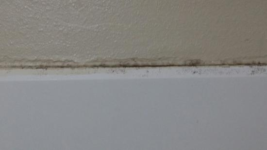 Comfort Inn Paducah : Mold in shower