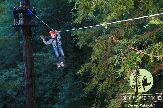 Sonoma Canopy Tours Ziplining amidst the redwoods & Ziplining amidst the redwoods - Picture of Sonoma Canopy Tours ...