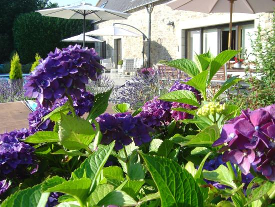 La Longere, Luxury b&b: Pool terrace surrounded by shrubs