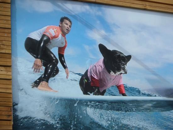 Palm Beach Surfing Experts: immagine reale!!