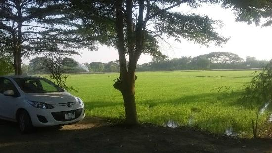RungAroon Resort : rice fields