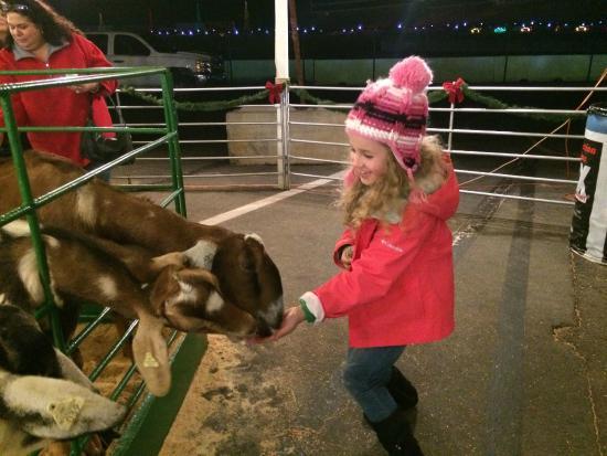 charlotte motor speedway petting zoo charlotte motor speedway christmas lights - Charlotte Motor Speedway Christmas Lights 2014