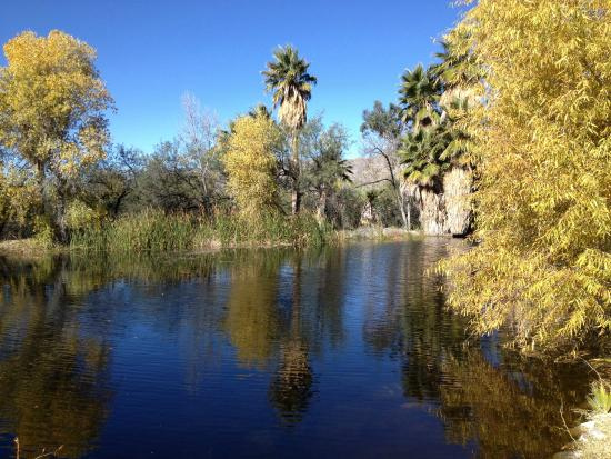 Agua Caliente Park: Perfect winter weather in the park