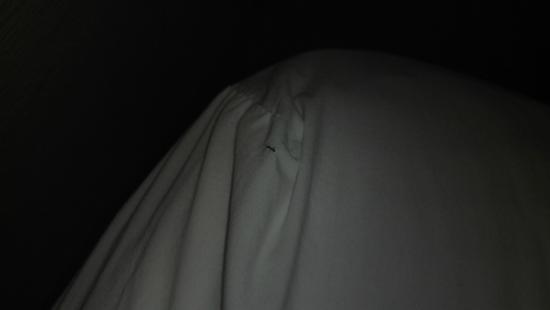 جراند فيستا هوتل: Ant in bed
