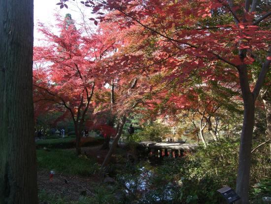 紅葉 - Picture of Higashiyama Zoo & Botanical Garden, Nagoya - TripAdvisor