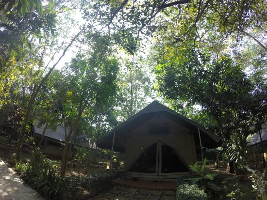 PhuWanalee Resort : Our boutique tent