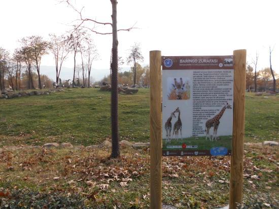 Mavi Kanatlı Gülen Kuş - Bursa Zoo, Bursa Resmi - TripAdvisor