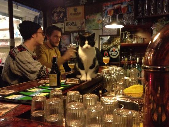 Cafe Gollem: Pub kitty 🐱