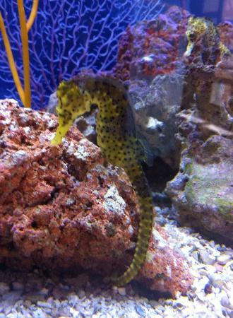 Seahorse Picture Of Birch Aquarium At Scripps La Jolla