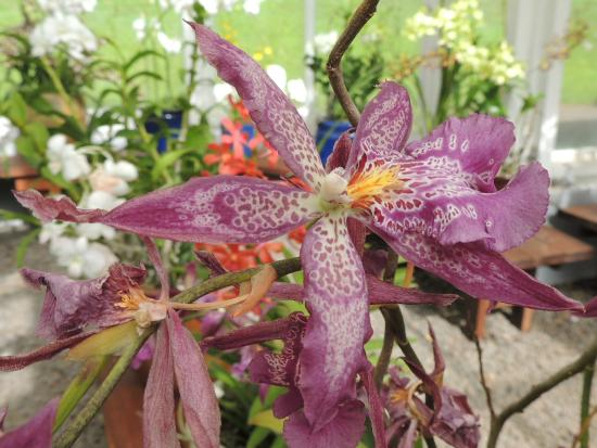 Orchid House and Gardens: Orchid