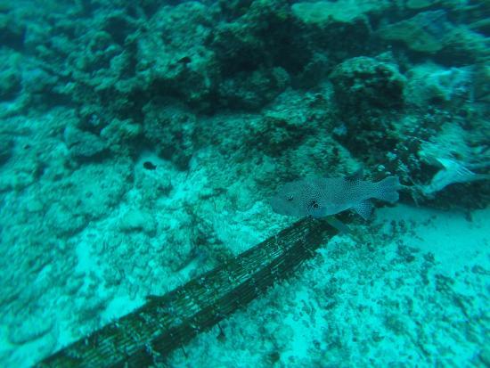 Euro Divers Kandooma : ship wreck1