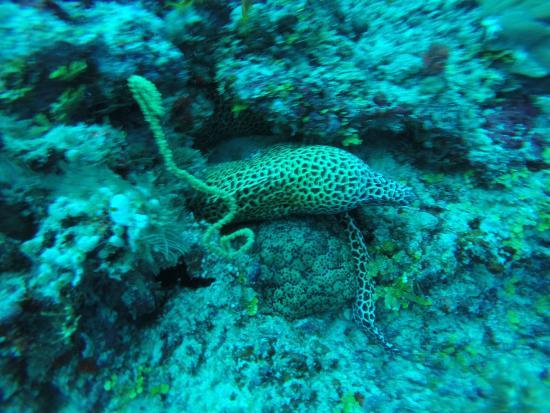 Euro Divers Kandooma: giant eel