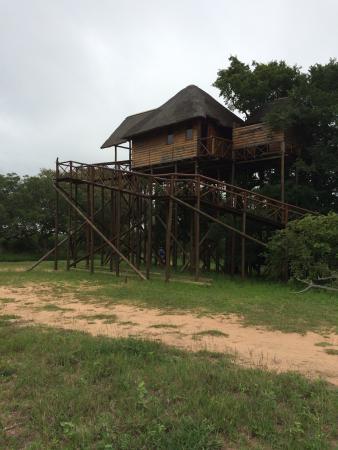Pezulu Tree House Game Lodge: Casa sul l'albero