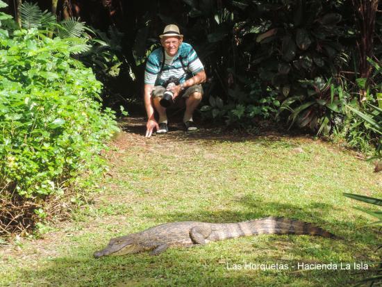 Hacienda La Isla Lodge : Cayman in the garden of the hacienda