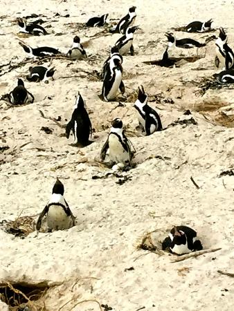 4 Cape Town Day Tours : Penguin colony viewing stop