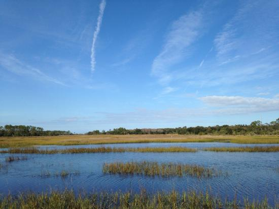 Dutton Island Preserve: Salt marches